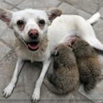 تصاویری از عجایب دنیای حیوانات