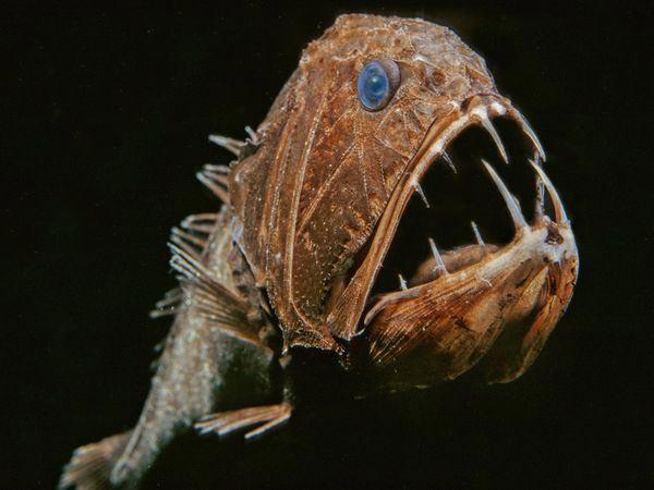 ترسناکترین موجودات اعماق دریاها
