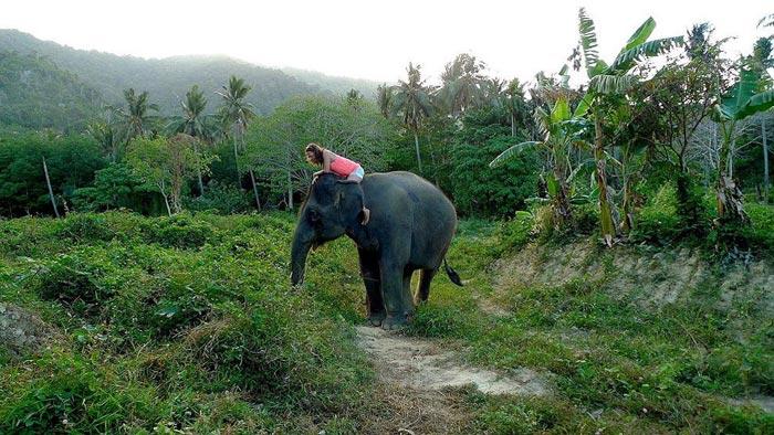تصاویر جالب از دنیای فیلها