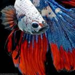 عکسهای پرتره فوق العاده دیدنی از ماهی ها