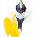 عکسهای پرتره فوق العاده دیدنی از ماهی ها!