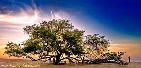 جالب ترین و کهن ترین درختان دنیا را بشناسیم.