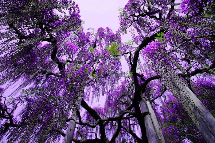 طبیعت زیبای ژاپن در فصل بهار