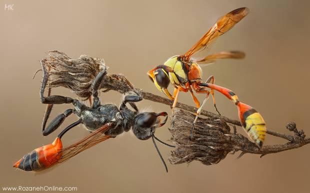 ماکروگرافی های زیبا از حشرات