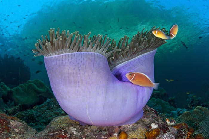 عجایب دیدنی در اعماق دریاها