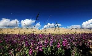 بهار زیبا در فلات پامیر به روایت تصویر