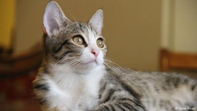 روان درمانی به کمک حیوانات برای رفع افسردگی