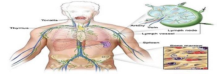 آشنایی و درک اهمیت سیستم لنفاوی در بدن