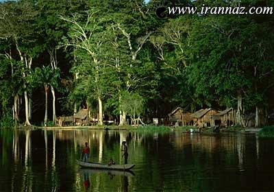 جنگلهای عجیب و زیبای دنیا