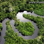 جنگلهای بسیار شگفت انگیز و زیبا در دنیا