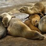 گزارشی تصویری از دنیای زیبای حیوانات