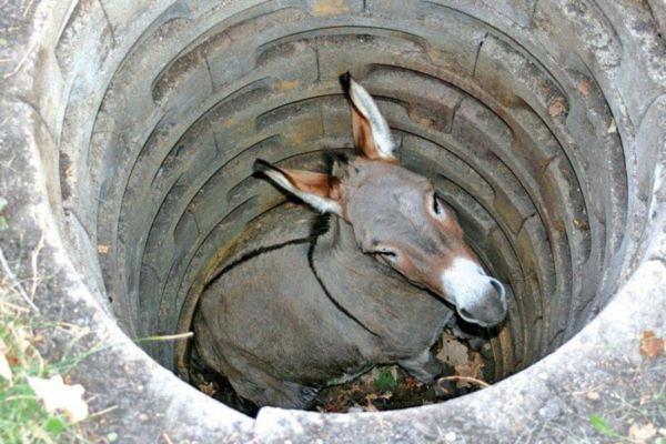 داستان زیبا ی چاه و الاغ