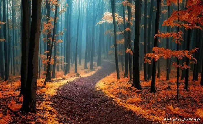 پانزده جنگل مرموز و شگفت انگیز دنیا