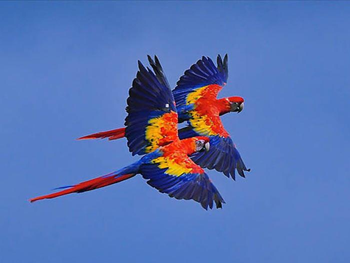 دنیای پرندگان در قالب تصویر