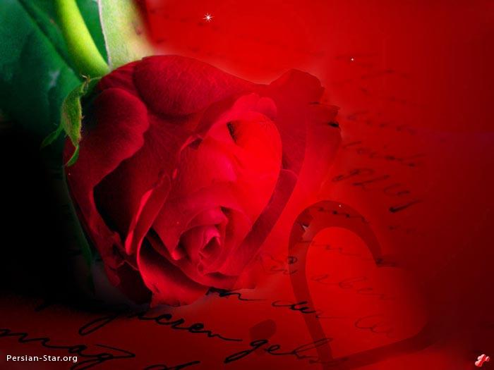 تصاویر زیبا و رمانتیک از گل رز