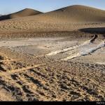 تالاب پساب یزد بهترین مکان برای کویرگردان