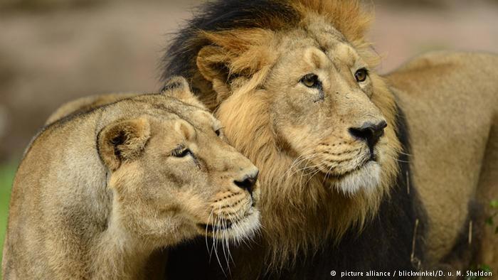حیوانات خطرناک و کشنده جهان
