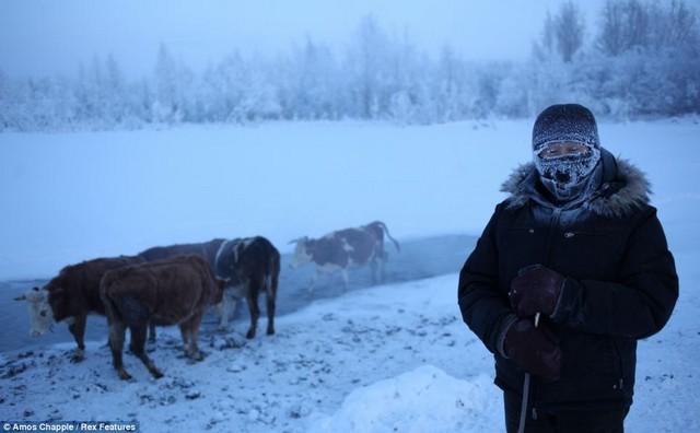 اویمیاکون سرد ترین روستای جهان