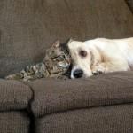 دوستی بین سگ و گربه و موش