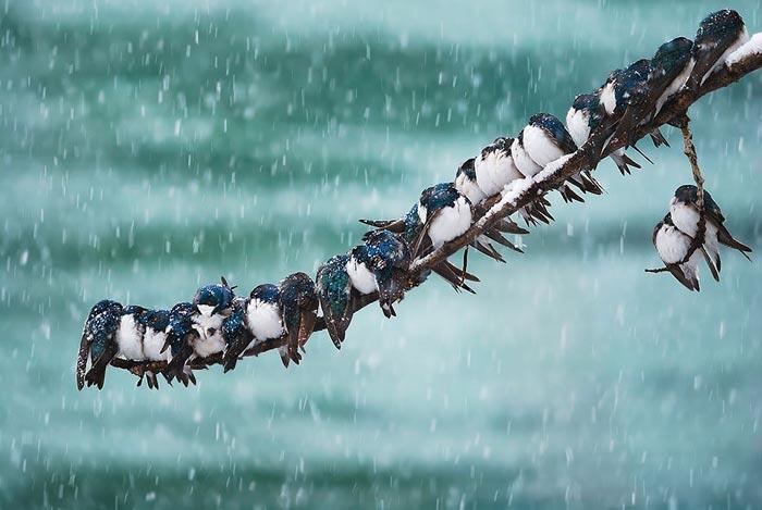 شیوه گرم شدن پرندگان