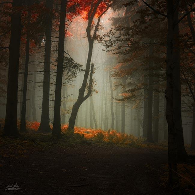 زیبایی های فصل پاییز در جنگل ها