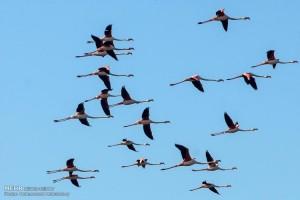 کوچ پرندگان به سواحل بندر ترکمن