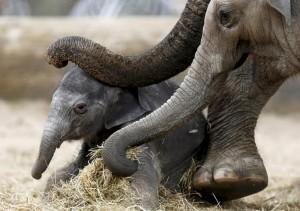 زیباترین عکسهای حیوانات