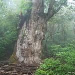 قدیمی ترین درختهای دنیا
