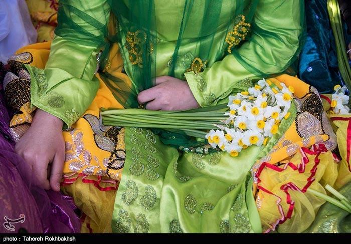 جشن گل نرگس در استان فاس