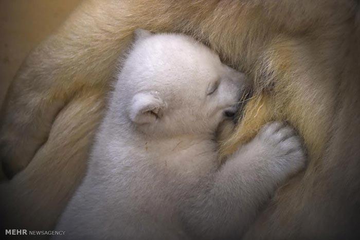 روابط مادر و فرزند در دنیای حیوانات
