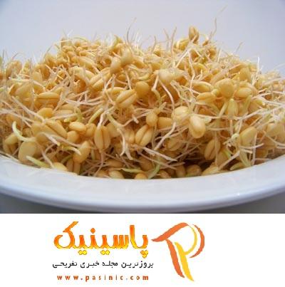 کاربردهای جوانه گندم در طب سنتی