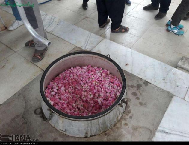 گردشگران بلژیکی از مزارع گل محمدی بازدید کردند.