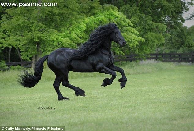 فردریک کبیر، خوشتیپترین اسب جهان