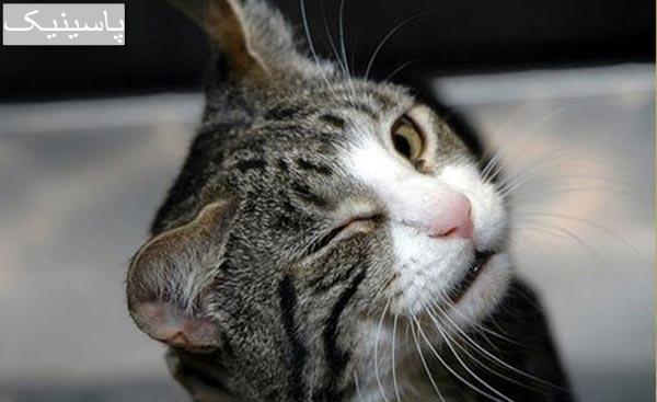 گربه ها و نکات جالبی درباره آنها که شاید نمیدانستید
