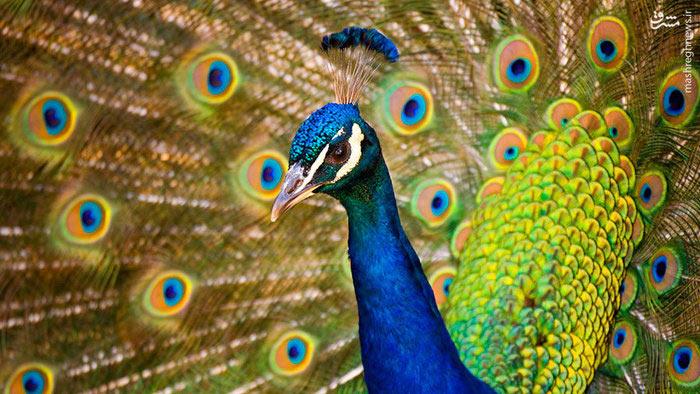 تصاویر زیبا از حیات وحش جهان