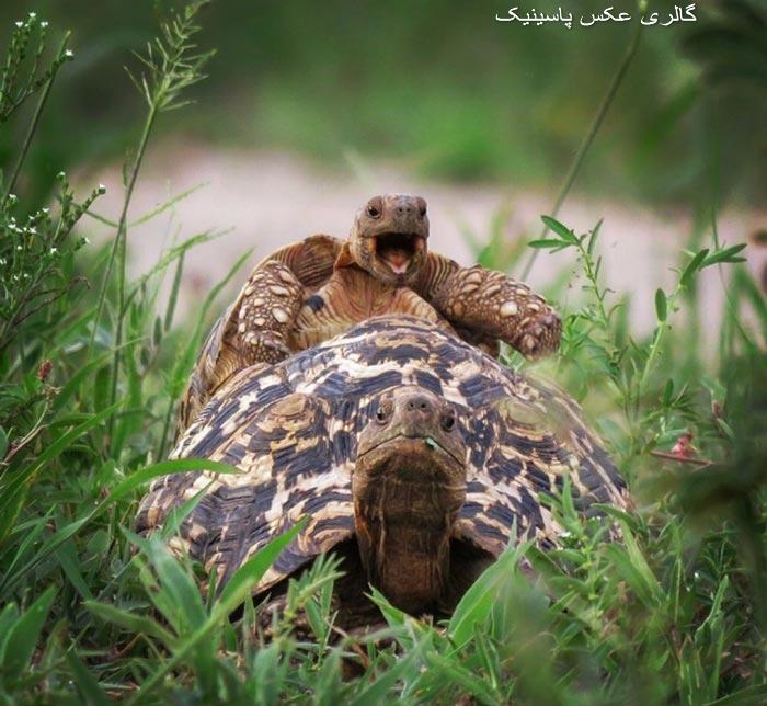 لحظه های خنده دار حیوانات در حیات وحش