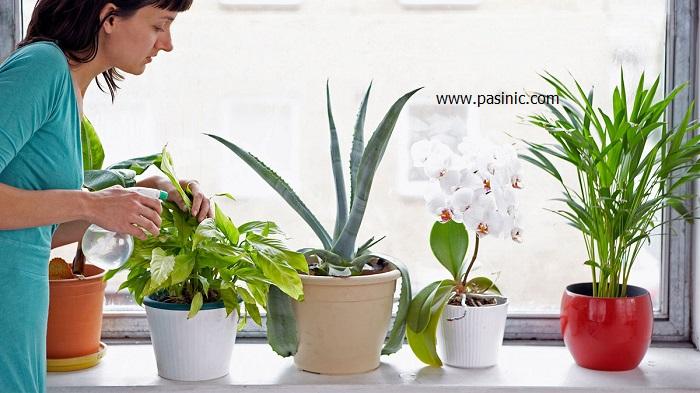 کاهش گرد و خاک منزل با گیاهان آپارتمانی