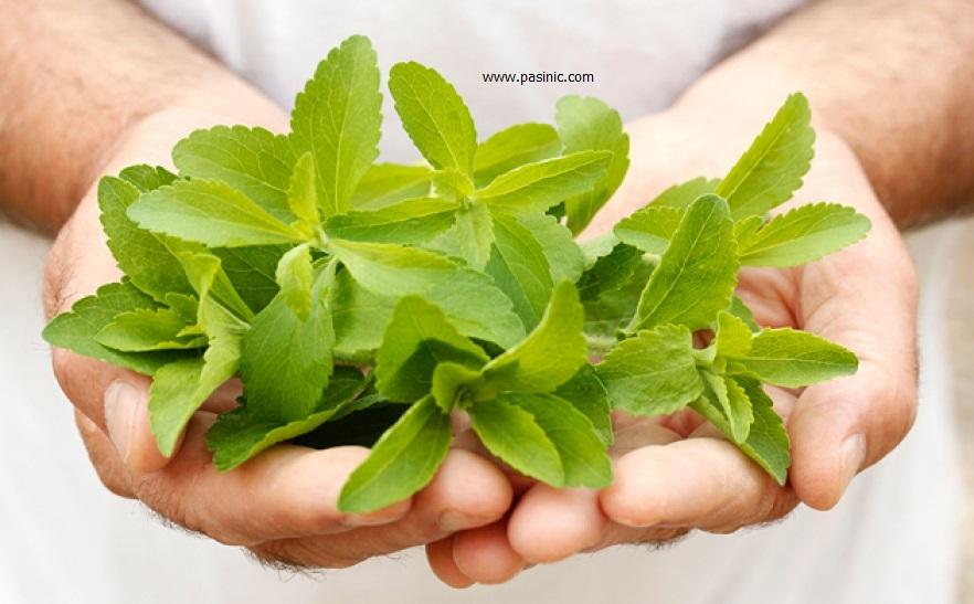 همه آنچه که درباره گیاه استویا باید بدانید
