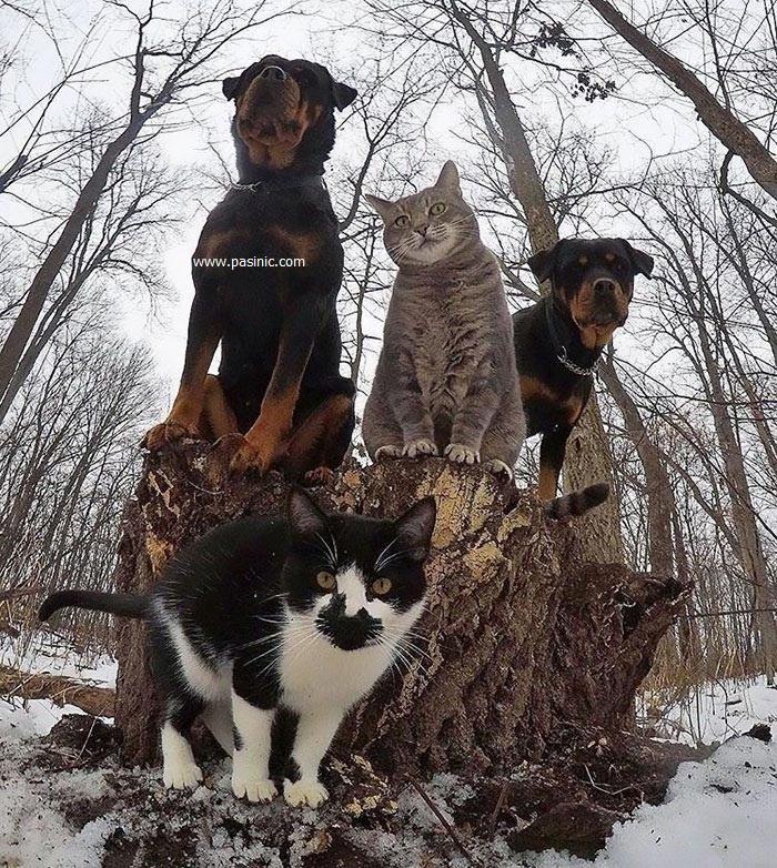 تصاویر جالب از حیوانات