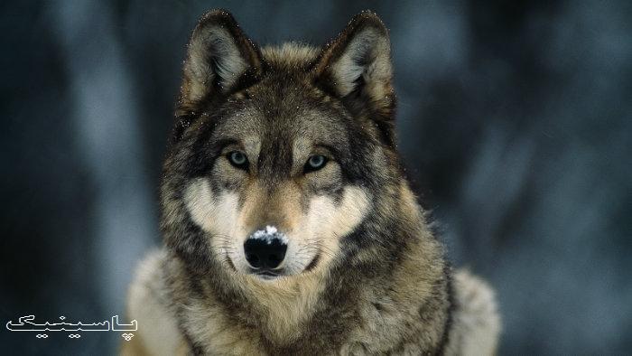 چگونه از حملات حيوانات وحشي در امان باشیم؟