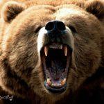حملات حيوانات وحشي را چگونه دفع کنیم؟