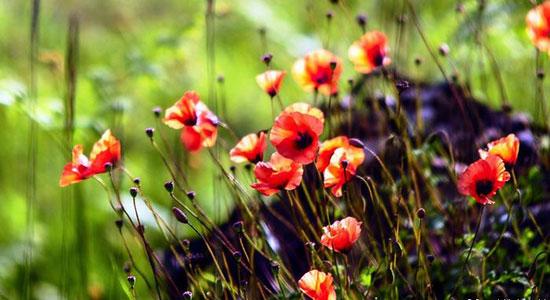 طبیعت زیبای رامسر به روایت تصویر