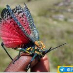 زیباترین حشرات دنیا را سیاحت کنید