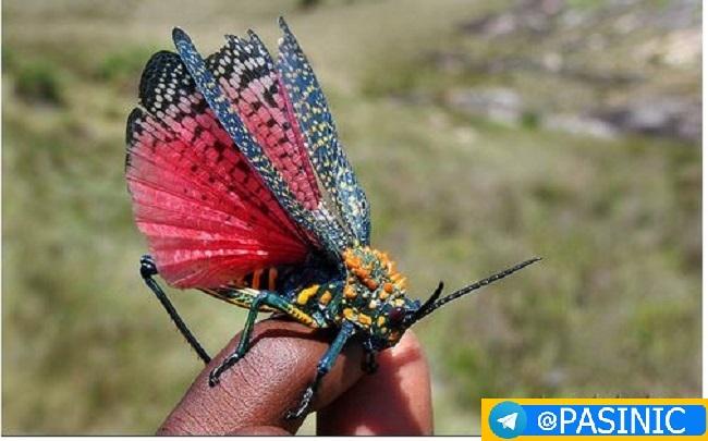تصاویر زیباترین حشرات دنیا