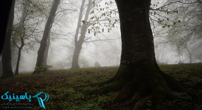 جنگل ارفعده و چشمه پراو