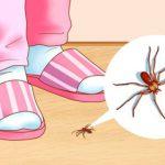 روش های مبارزه و از بین بردن حشرات خانگی